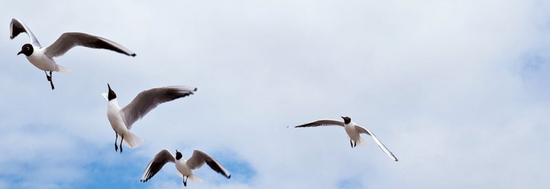 urlaubsbilder, vögel ostsee richtig fotografieren