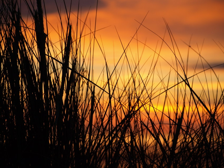 Dünengras sonnenuntergang