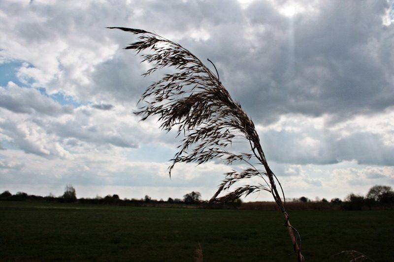 fahn im wind, wümmewiesen spazieren