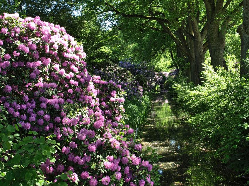 zur bl tezeit im rhododendronpark bremen wie dornr schen. Black Bedroom Furniture Sets. Home Design Ideas
