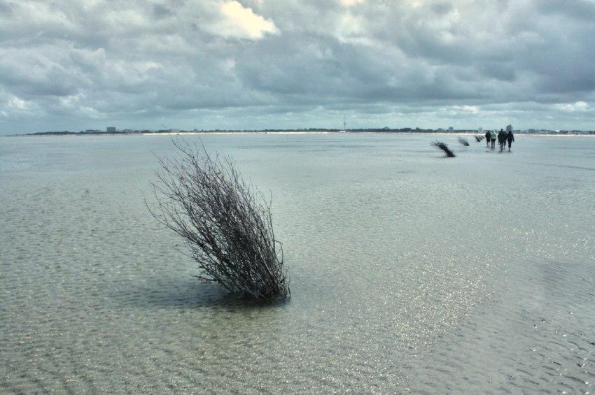 bernsteinsuche cuxhaven, wattwanderung