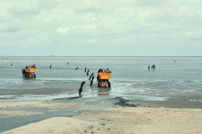 cuxhaven wattwanderung, bernsteinsuche